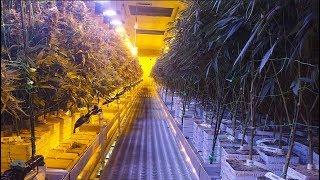Medical marijuana dispensary opens in N.J.