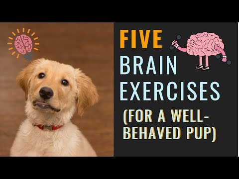 Dog Mental Exercise (For A More Relaxed Dog) - YouTube
