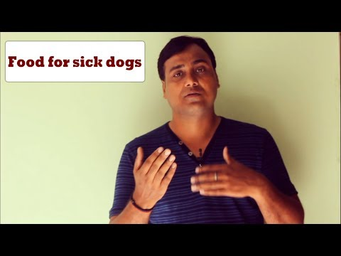 Food For Sick Dogs: Things To Remember(hindi)