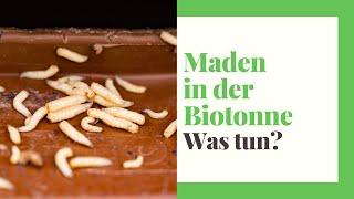 Maden in der Biotonne (erkennen, bekämpfen, vorbeugen)