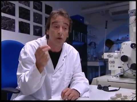 Le traitement effectif du microorganisme végétal des ongles du pied