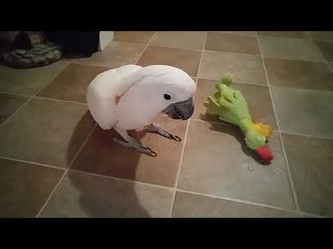 Max And The Green Chicken