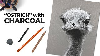 Charcoal Drawing On Gray Paper - Ostrich