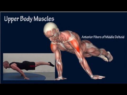 A siroté le muscle sur les reins