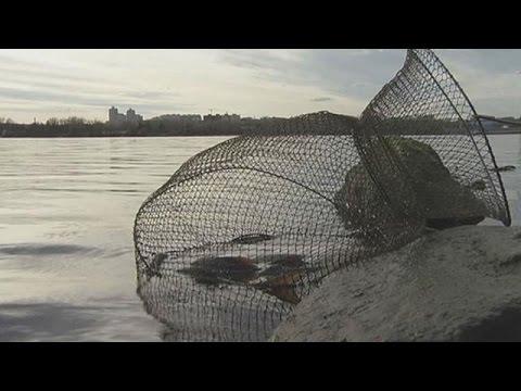 La pesca russa di 3.6 som su che impigliarsi