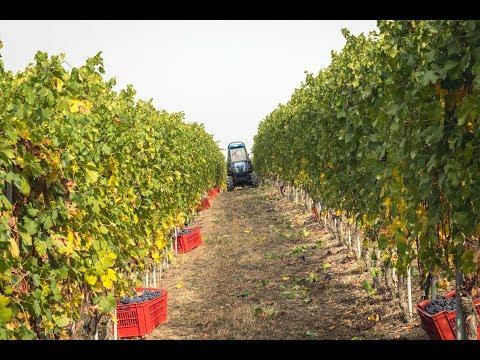100.000 italienische Weine! Kulinarische Reise ins Piemont Teil 1 - TRUE FOOD | ellevant
