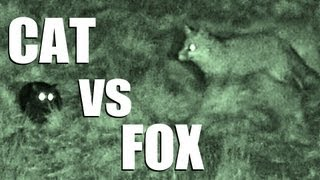 Fieldsports Britain – Cat vs Fox – night vision in action (episode 168)