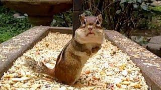 Squirrel Feeder 2 – Littlehouse on the Prairie