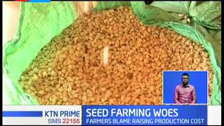 Maize seed farmers from North rift vows to quit farming over low purchase price