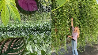 MASSIVE HOUSEPLANT TOUR OF THE FLORIDA GREENHOUSE!