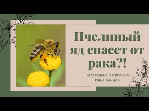 Пчелиный яд спасет от рака? (2014, США)