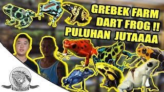 GREBEK KOLEKTOR KATAK PULUHAN JUTA DART FROG !! JARANG DI INDONESIA