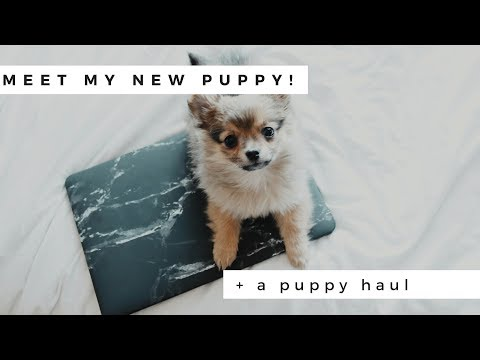 New Puppy Haul My Pomeranian Part 2 Diana Espir смотреть