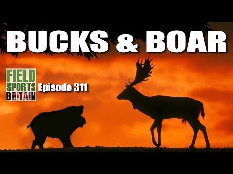 Fieldsports Britain – Bucks & Boar