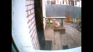 Clever cat and stupid cat / Умный и глупый - Video Youtube