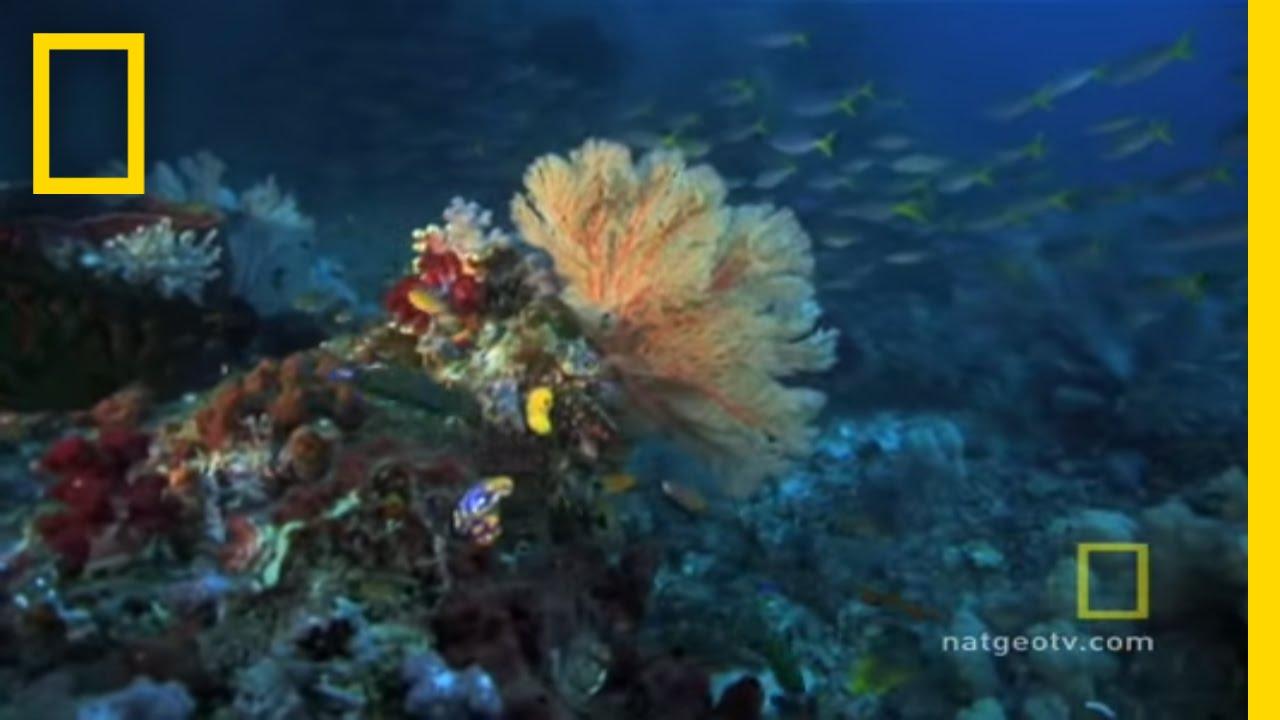 Great Barrier Reef | Exploring Oceans thumbnail