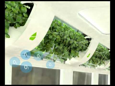 nasa air quality plants - photo #11