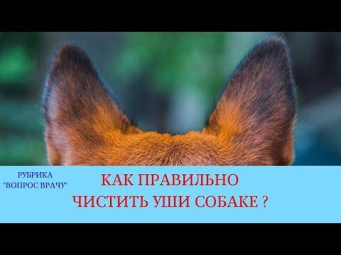 27.04.18 Отит у собаки. Чистка ушей и лечение наружного отита