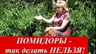 ПОМИДОРЫ -ТАК ДЕЛАТЬ НЕЛЬЗЯ !