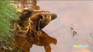 Vertido de aguas ácidas en el Odiel