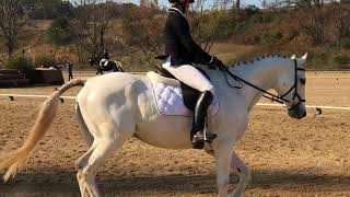 For sale - Second Chance Thoroughbreds - Gathering Cloud dressage BN river glenn