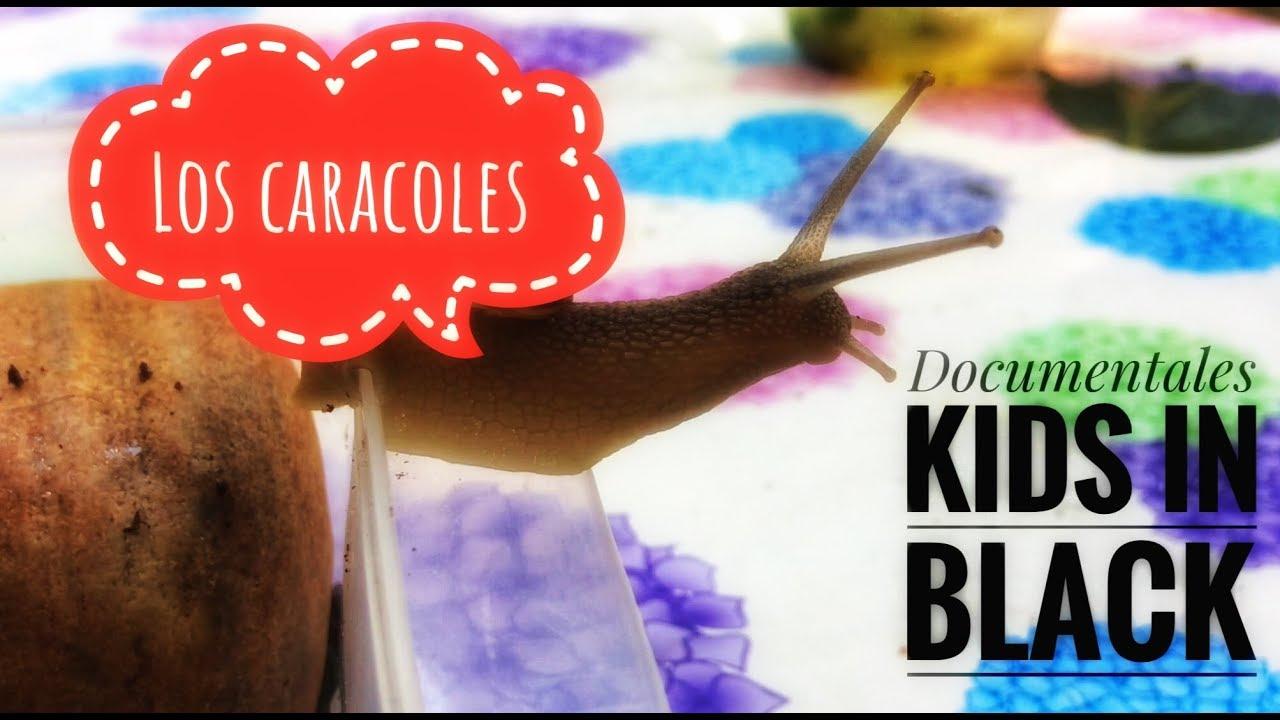 Los caracoles - Documental para niños