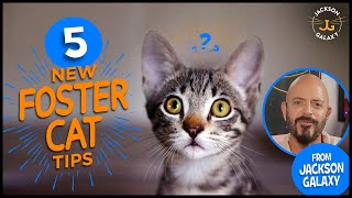 5 Tips for your New Foster Cat