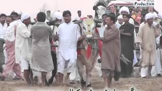 preview picture of video 'Zahid Mehmood Khoday, Chakwal'