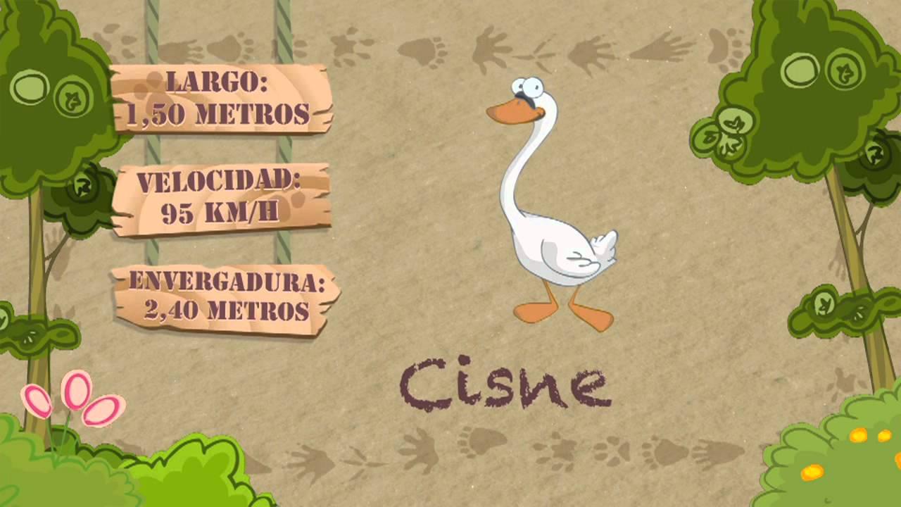 Las características del CISNE