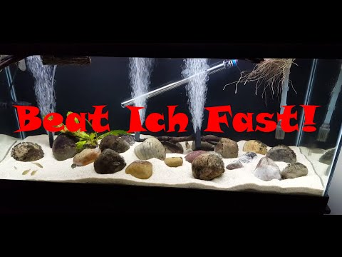 Video Quick Ich Treatment