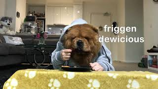 Chow Chow Dog Reviews Restaurant Food