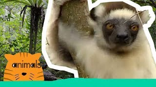 Be The Creature - Expedition Lemurs (Full Episode)