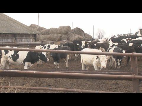 Глава района посетил сельхозпредприятия