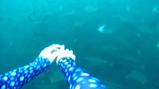 Diver Swims With Hundreds Of Rays Flying Through Water