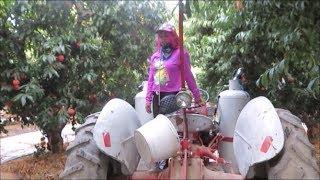 Me Pagan Por Caminar Mujer Tractorista | Sweatcoin