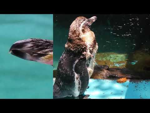 鳥類の生態ペンギン