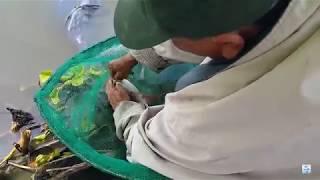 Câu cá giải trí - phát hiện cao thủ nằm trong lá ủ