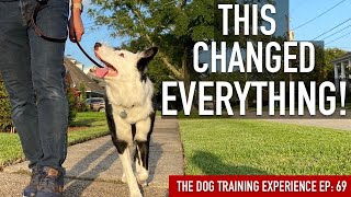 The right way to Practice the 1 Factor That's Made All of the Distinction in My Leash Coaching