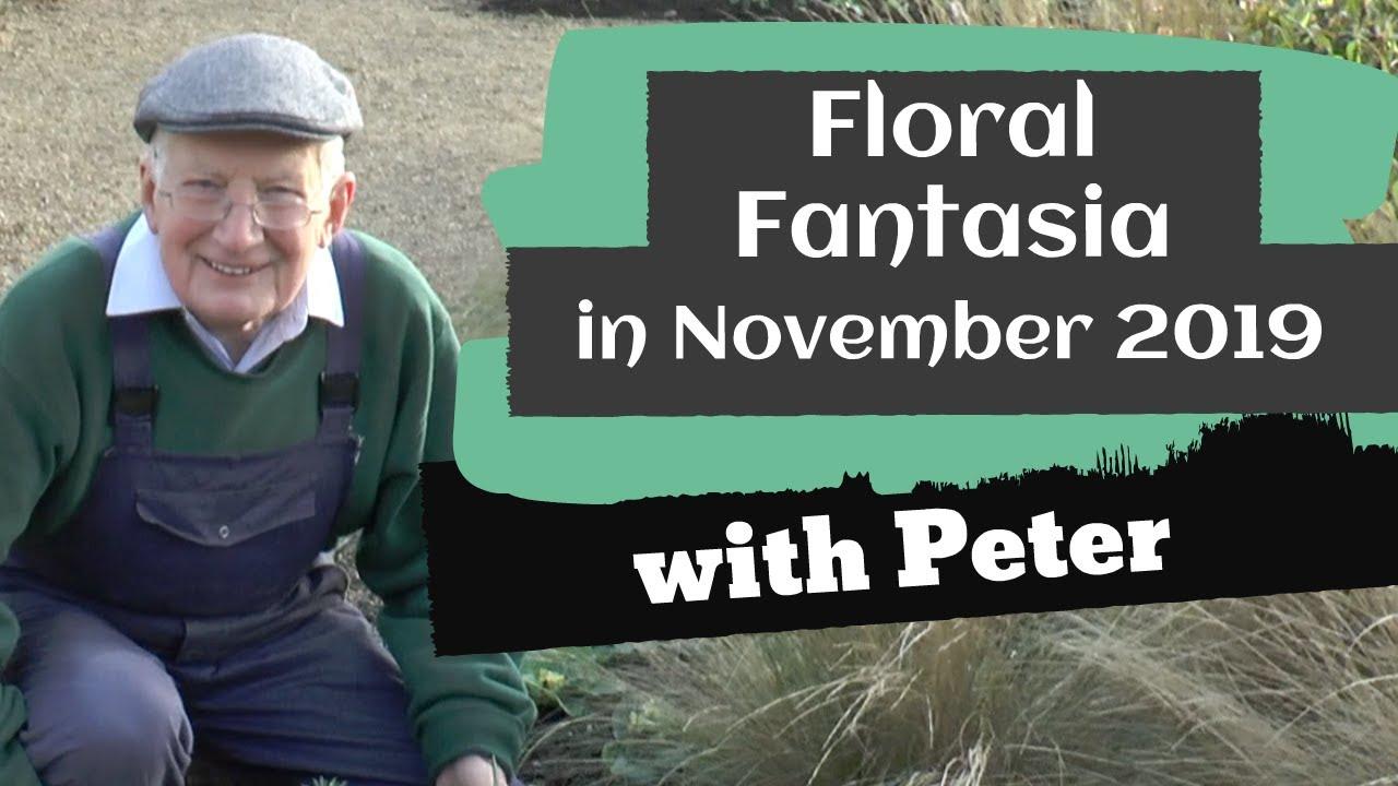 Floral Fantasia in November 2019