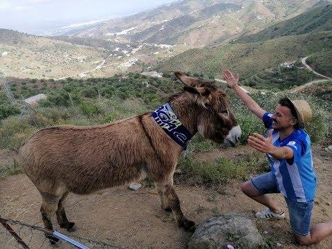 La historia de Baldomera, una burra viral y malaguista