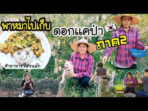 พาหมาไปเก็บดอกเเคป่าสนุกมาก ภาค2/EP.130/ไปเก็บไข่จากเล้ามาทำอาหาร/บรรยากาศดีสุดๆ/สะใภ้เกาหลี