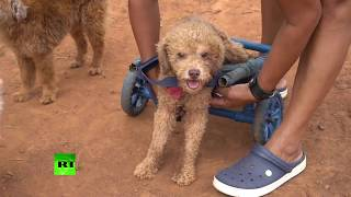 'Second chance': Paraguayan animal rescue worker builds handmade wheelchairs for pets