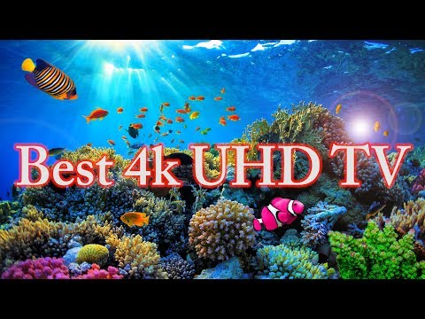 coral reef youtube