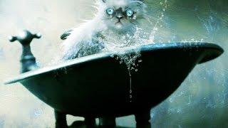 Смешные кошки :)  Часть 250 - Ванные процедуры:))