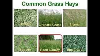 How To Buy Quality Hay