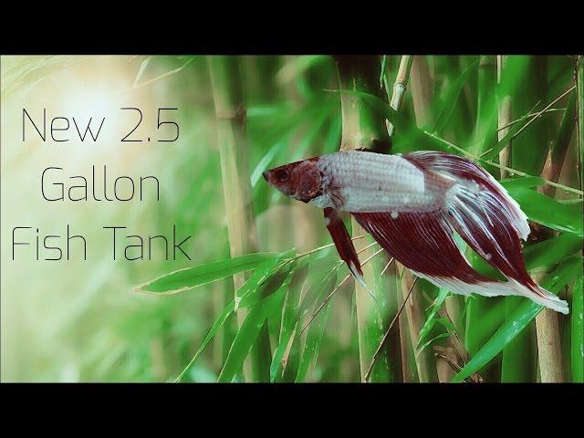 New 2.5 gallon betta fish tank