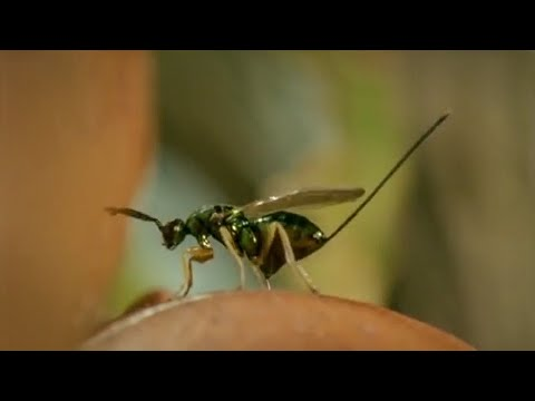 Life of Insects | Attenborough: Life in the Undergrowth | BBC