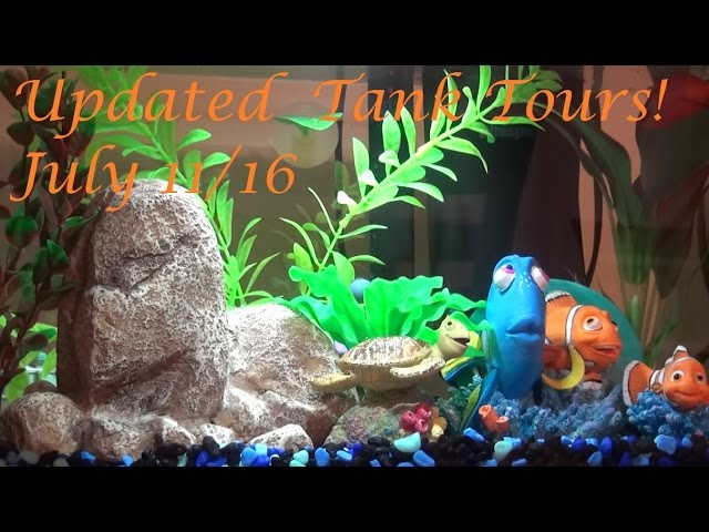 Updated Betta Tank Tours! 7/11/16 | Harry Potter, Nemo, and Natural Themes