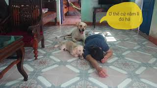 Giả Chết Thử Phản Ứng Của Kim Chi Củ Cải | Faking Death In Front Of My Puppy
