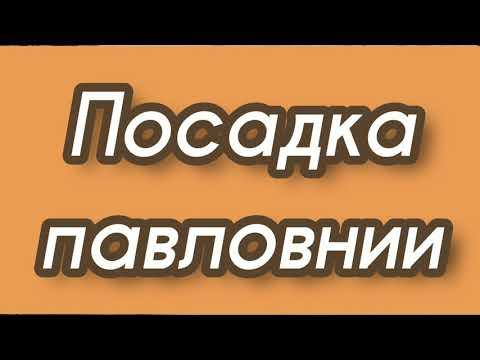 Посев семян медоносных деревьев. Павловния-медовое дерево+. 24/03/2021